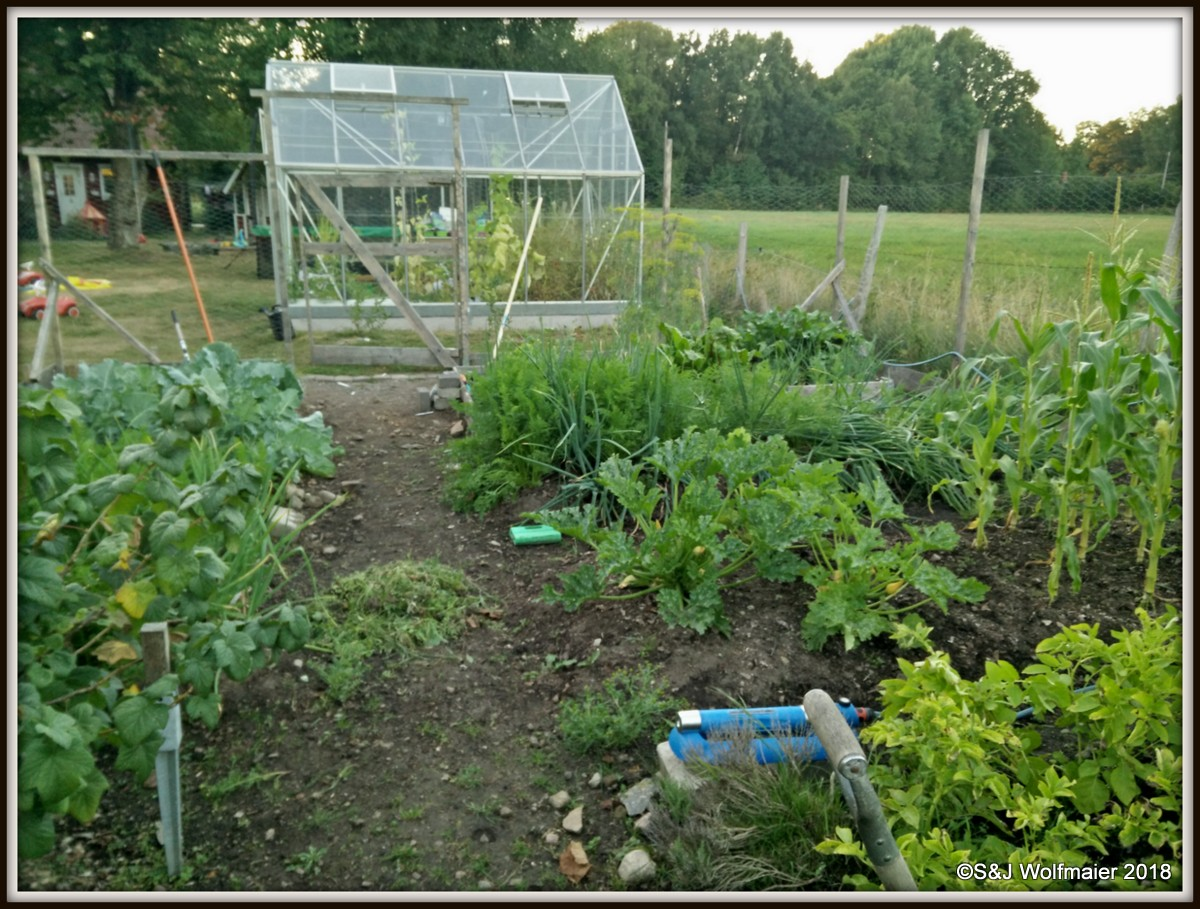 Our garden with the greenhouse in the back.